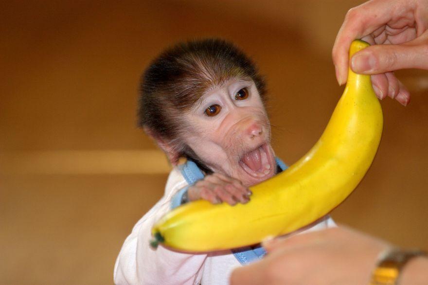 Mајмунчето Лука вратено во Зоолошка и во добра состојба