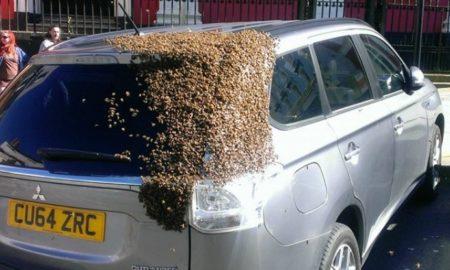 Дваесет илјади пчели блокираа автомобил затоа што нивната матица била внатре (ВИДЕО)