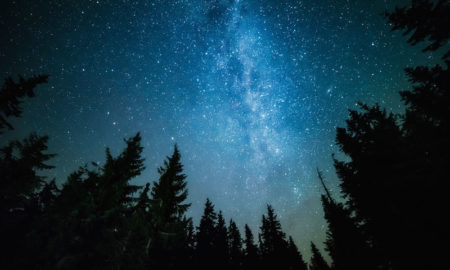 Научниците откриваат: И дрвјата спијат