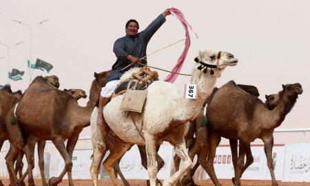 И ТОА ГО ИМА: Дванаесет камили елиминирани на натпревар за убавина поради ботокс